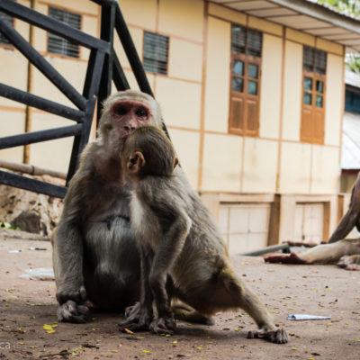 Una piccola famigliola di cattivissime scimmie… ma che tenere!