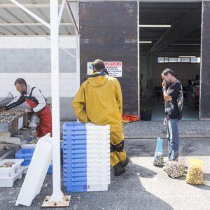 Marisqueros vendono il 'raccolto' del giorno al porto di Arosa
