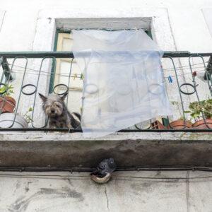 Un cane e un piccione - Muraria