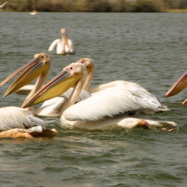 viaggio_fotografico_Senegal