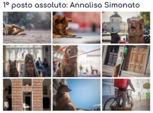 dog photography torino