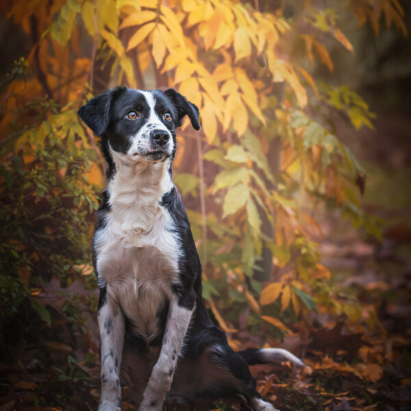 workshop-dog-photography