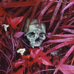 Of Lilies and Remains, Congo